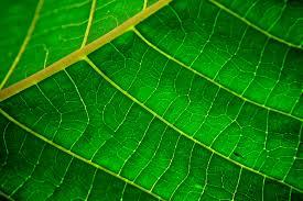 L'or vert, le véritable pouvoir des feuilles!