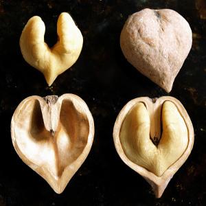 De très bonnes noix en forme de coeur!