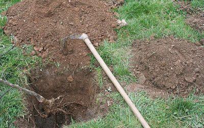 Astuces en vue d'implanter un Jardin-Forêt: La préparation du sol.