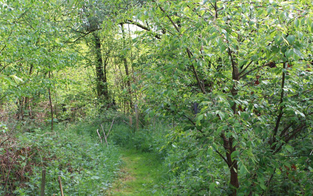 Quels sont les services rendus par un Jardin-Forêt ?
