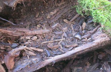 La vie de la forêt émane de sa quantité de bois mort !