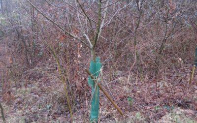 Une source infinie de matière organique: les arbres sacrificiels