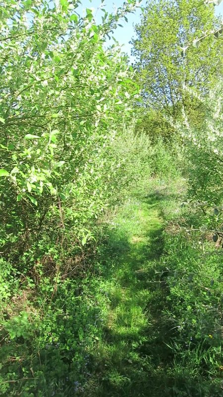 grand jardin foret permaculture