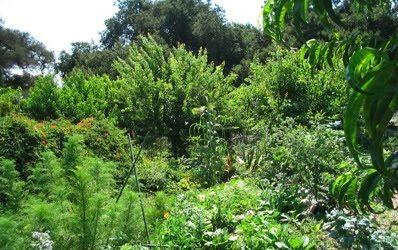 Pour comprendre le concept de jardin-forêt: comparaison entre l'Ager (qui est à l'image du champ de blé…) et l'Hortus (un fouillis végétal pour qui ne sait le décrypter…).