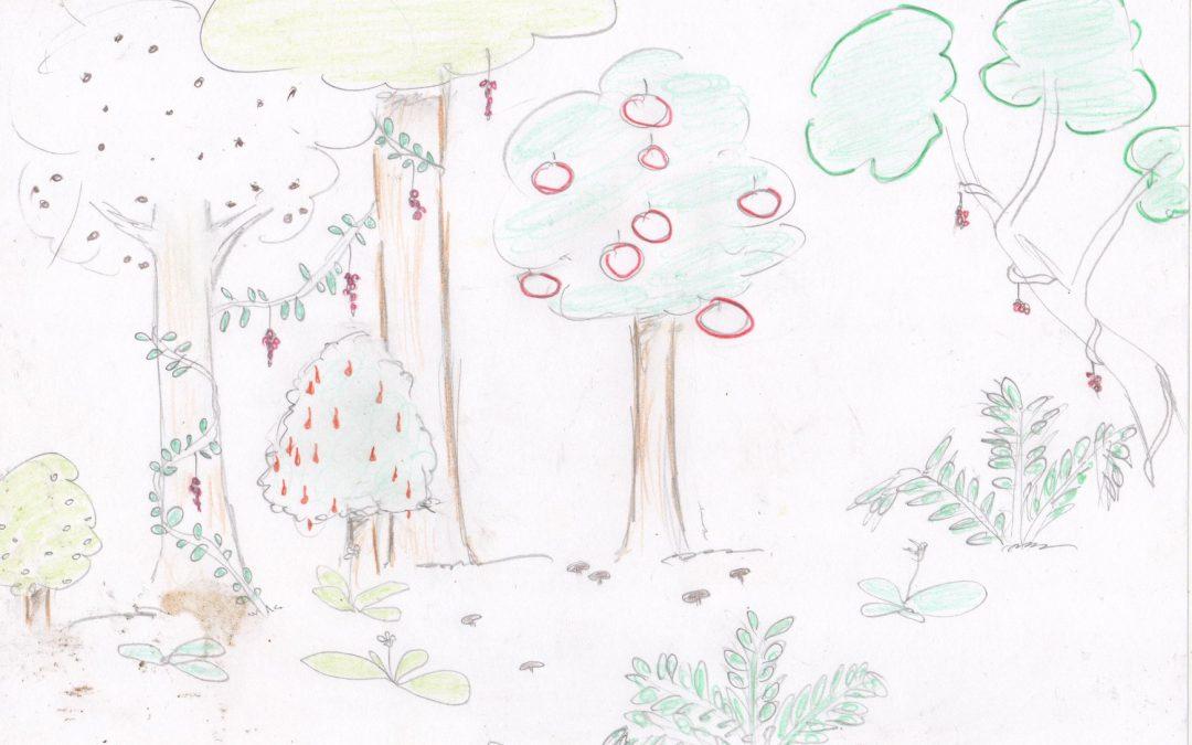 Histoire des Jardins Forêts…