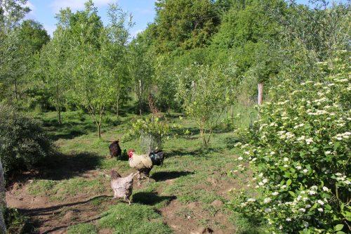jardin foret coq