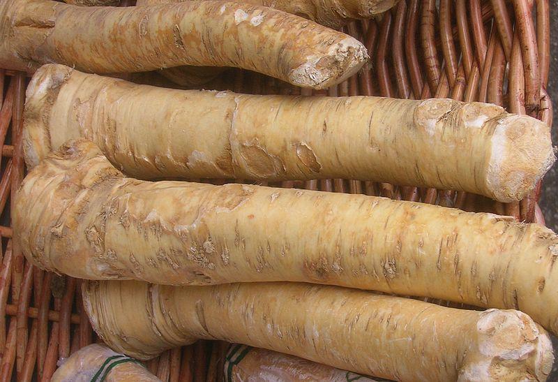 Le raifort, un condiment dans un jardin-forêt