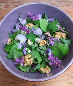 salade plantes sauvages