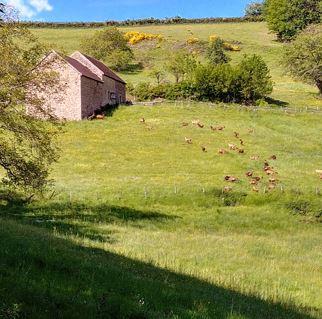 Chèvrerie expérimentale et forêt nourricière à Sivignon (71)