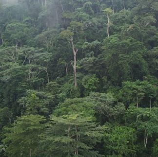Reforestation nourricière en République Démocratique du Congo