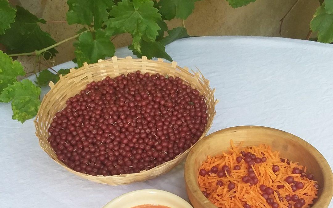 Sauce Eléagnette : essais culinaires au Jardin-forêt