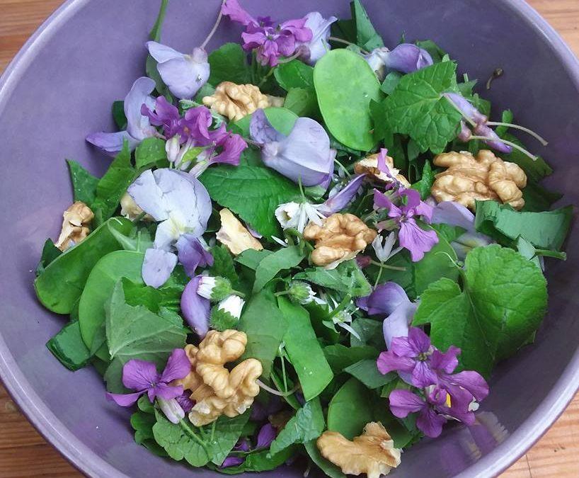 Nouvelles dates de formation Plantes sauvages comestibles avec l'Herbandine