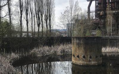 Jardin-forêt et dépollution de terrains